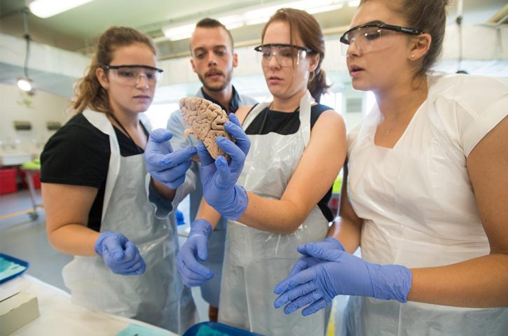 Neuroscience Research: Breakthroughs in Education